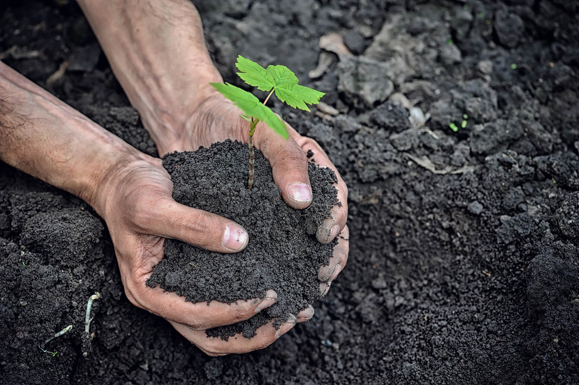 hands-holding-young-plant-with-soil-P64QKQH-1.jpg